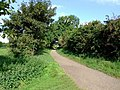 Trent Lane by the gate to the meadows - geograph.org.uk - 1097078.jpg