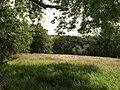 Trewen Wood across a field - geograph.org.uk - 891671.jpg