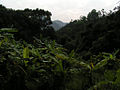 Tsing Yi trail.JPG