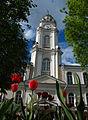 Tulips near City Hall in Viciebsk - panoramio.jpg