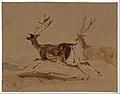 Two Stags Running MET DT4911.jpg
