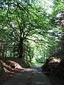 Ty-n-y-coed Road near Creigiau - geograph.org.uk - 2435250.jpg