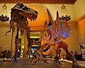 Tyrannosaurus Triceratops Los Angeles, Natural History Museum.jpg