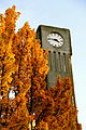 UBC Clock Tower.jpg