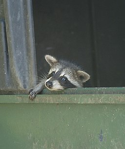 backyard pests