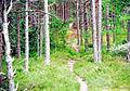 Ullahau-Naturreservat-Faaro-Gotland-2010 09.jpg