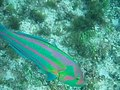 File:Underwater wrasse 2007 04 09.ogv
