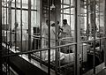 University Children's Hospital, Vienna; doctors in the Heubn Wellcome V0029032.jpg