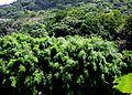 Utuado, Puerto Rico - panoramio.jpg