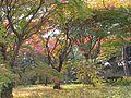 Varietà di Colori - panoramio.jpg