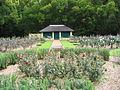 Vergelegen Rose Garden 4.JPG