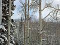 View from Durango Mountain Resort - panoramio (1).jpg