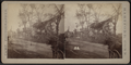 View of horse-carts moving along the street with collapsed houses and downed trees, by Camp, D. S. (Daniel S.).png