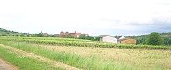 Vignes à Saint-Jean-de-Vaux.JPG