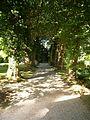 Villa Boveri, Baumallee im Park.JPG