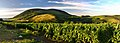 Vineyards over Eger. Winnice nad Egerem - panoramio.jpg