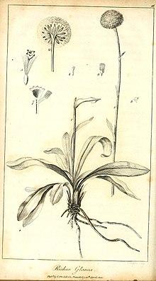 Illustration from 1800