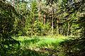 Waldmoor-Torfstich 1.jpg
