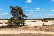 Wandeling over het Hulshorsterzand-Hulshorsterheide 20.jpg