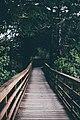 Wanderlust (Unsplash).jpg