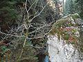 Wandern im November in Todtmoos - panoramio (23).jpg