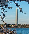 Washington monument and cherry blossoms - Washington DC - 2014-04-10 (13772901163).jpg
