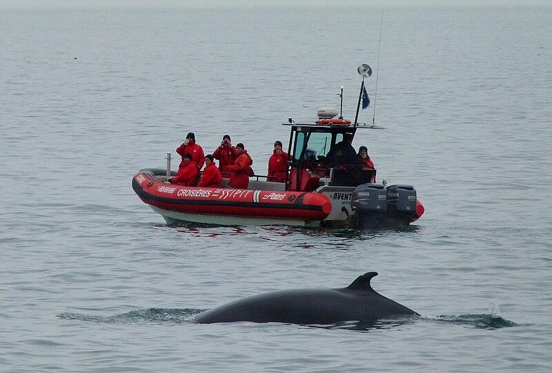 File:Whale watching Tadoussac 04.jpg
