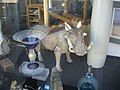 Wild Boar in a china shop - geograph.org.uk - 1335745.jpg
