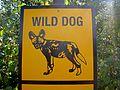 Wild Dogs? Wild! (2813281796).jpg