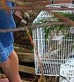 Wilde kat in draadkooi.jpg