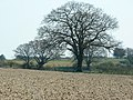 Winter Tree - geograph.org.uk - 388003.jpg