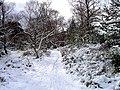 Winter Walks - geograph.org.uk - 172337.jpg