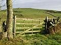 Wooden field gate, looking towards Brownie Hill - geograph.org.uk - 611517.jpg
