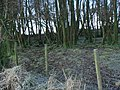 Woodland strip in winter guise - geograph.org.uk - 1073823.jpg