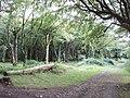 Woods at Trewollack, near Rosenannon - geograph.org.uk - 221615.jpg
