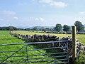 Wormhill - farmland NE of Mosley Farm - geograph.org.uk - 1021349.jpg