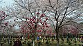Xiangcheng, Suzhou, Jiangsu, China - panoramio (68).jpg