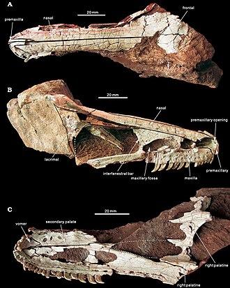 Coniacian - Xixiasaurus
