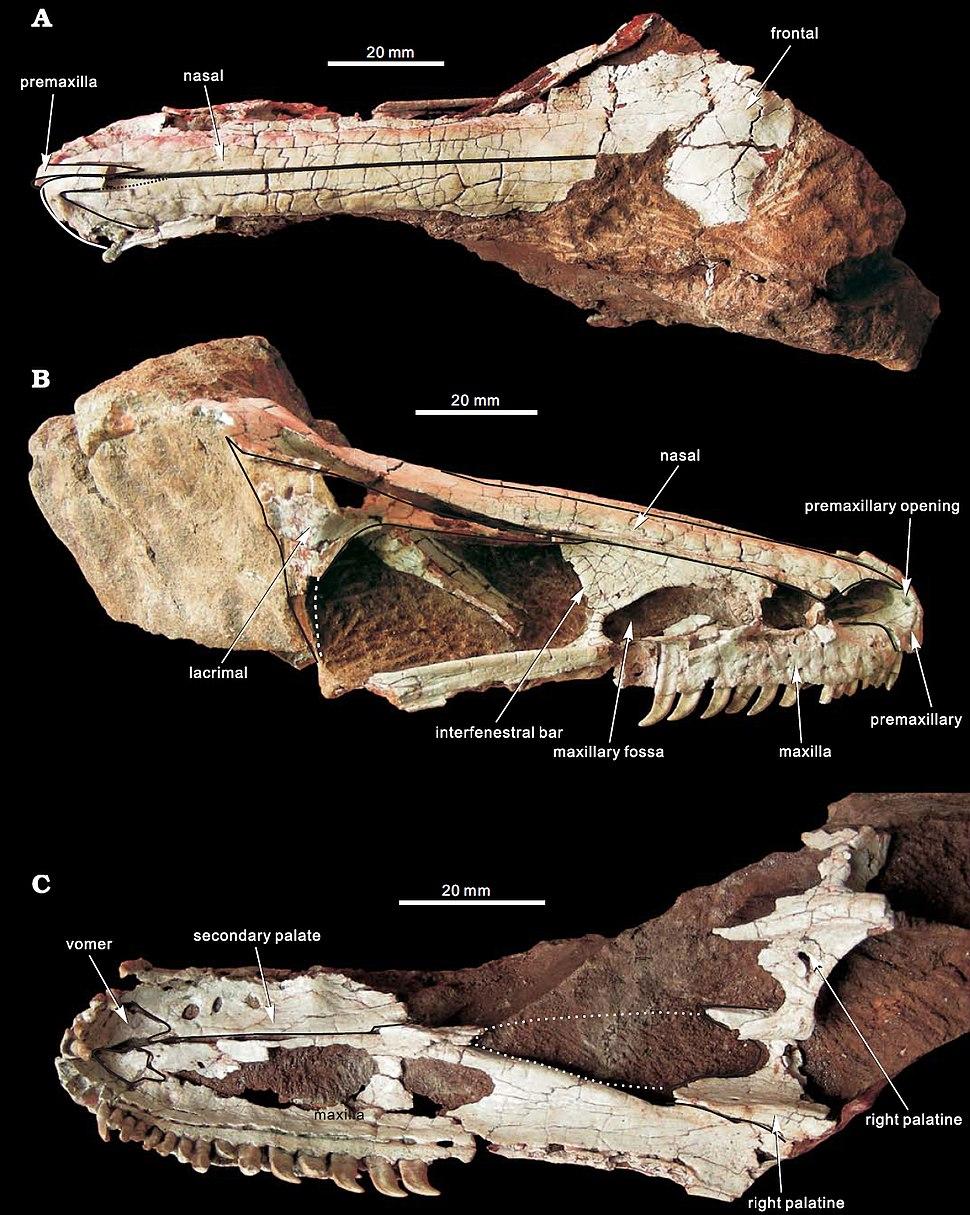 Xixiasaurus henanensis