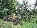 Ye Olde Oak - geograph.org.uk - 51907.jpg