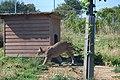 Zoologická zahrada Tábor - Větrovy (09).jpg