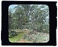 """Willowmere,"" Rear Admiral Aaron Ward house, 435 Bryant Avenue, Roslyn Harbor, New York. Rose garden LCCN2008677536.jpg"