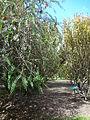 (Jardín Botánico de Quito) pic bb8a5.JPG