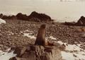 (Jubany) Recuento de mamíferos (15).png