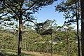 Đương lên đồi Mimosa thung lũng tình yêu - panoramio (1).jpg