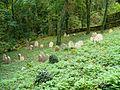 Židovský hřbitov Písková Lhota celkový pohled 2.JPG