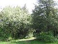 Дендрологічний парк 133.jpg