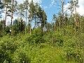 Между с-т Русь и Селиванихой 2013 - panoramio (8).jpg
