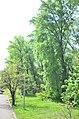 Наводницкий парк в Киеве. Фото 31.jpg