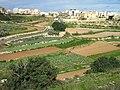 Поля на Мальте.jpg
